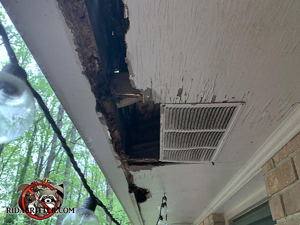 The water damaged edge of the plywood soffit panel of a house in Roswell Georgia has been further damaged by raccoons who tore it apart to get into the attic of the house