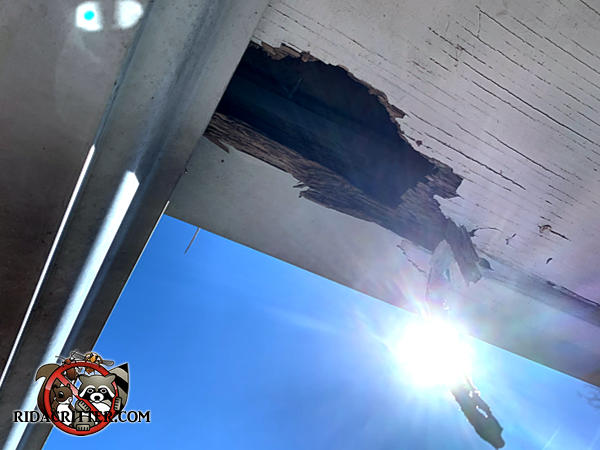 Raccoons tore a hole about ten inches long by four inches wide through the wooden soffit of a house in Snellville Georgia.