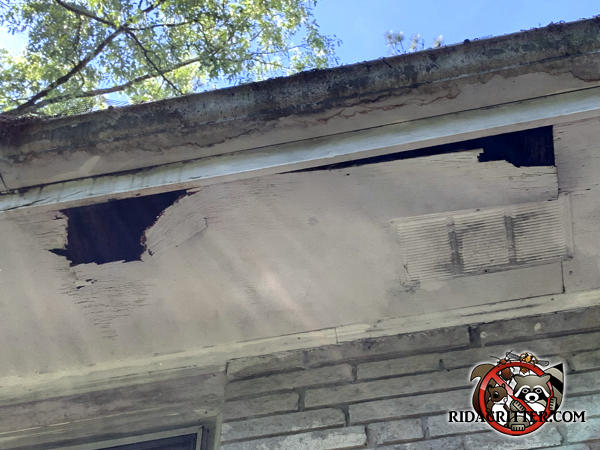 Raccoon tore holes of about eight inches in the soffit panel of a house in Tucker Georgia