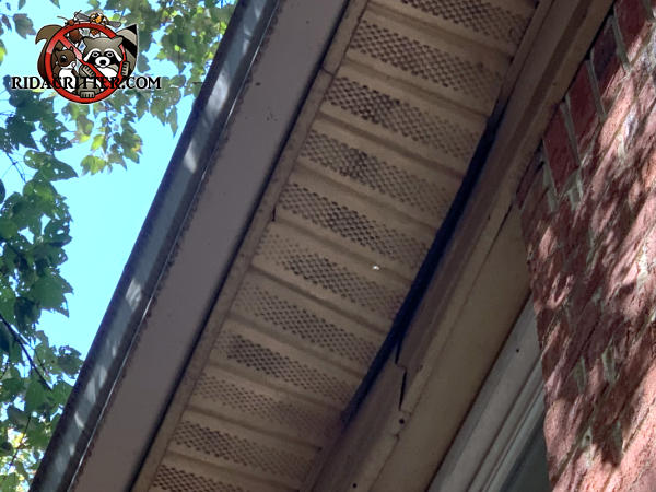 A few feet of the soffit panel of a house in Tucker Georgia is sagging because of the weight of raccoons running back and forth on top of it.
