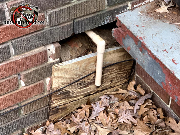 Raccoons got in through a hole about a foot square in the brick wall that is only partially covered by a piece of plywood