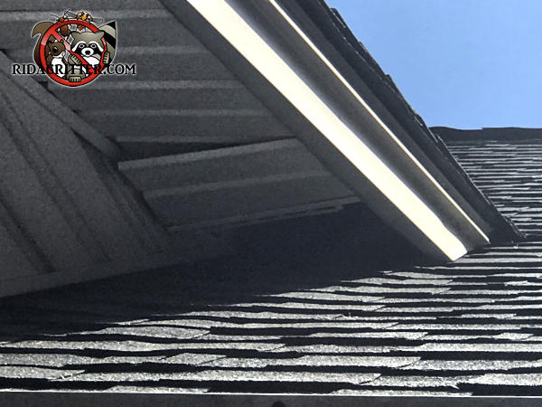 A soffit panel section near a roof junction was pushed out of place allowing raccoons into the attic of a Carrollton Georgia home