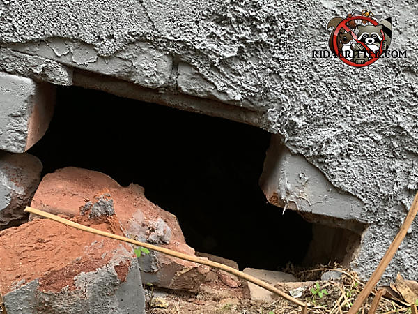 Several displaced bricks in the foundation allowed raccoons to get into the crawl space of a house in Atlanta