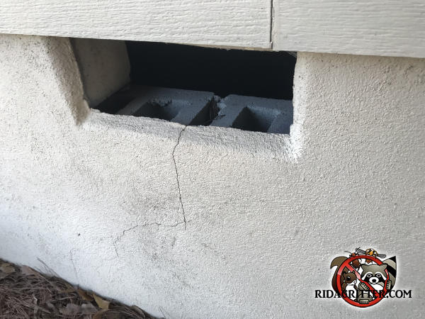 Square gap in the foundation where the vent cover fell out and how a raccoon got into the crawl space