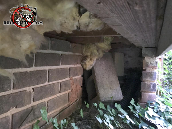 Uncovered access opening in the brick foundation of a house in Dunwoody Georgia allowed raccoons into the crawl space
