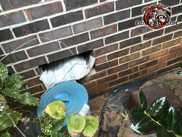 The foundation vent fell out of its opening in a brick house in Atlanta and raccoons got in through the opening