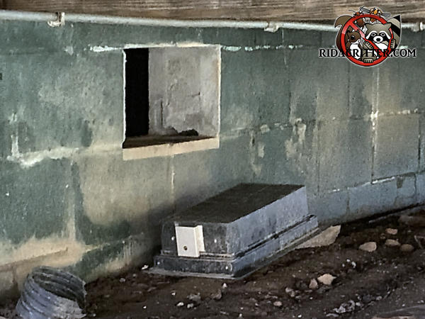 The foundation vent under the deck of a house in Canton Georgia fell out or was pulled out by raccoons