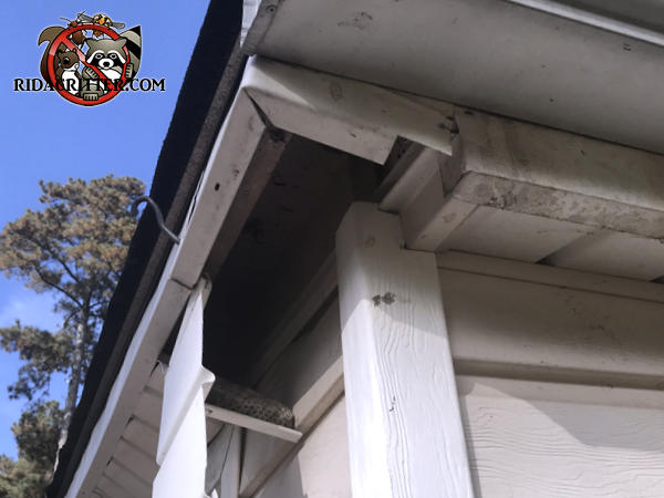 Part of the soffit panel is hanging down and another part is missing at a house in Marietta due to raccoon damage