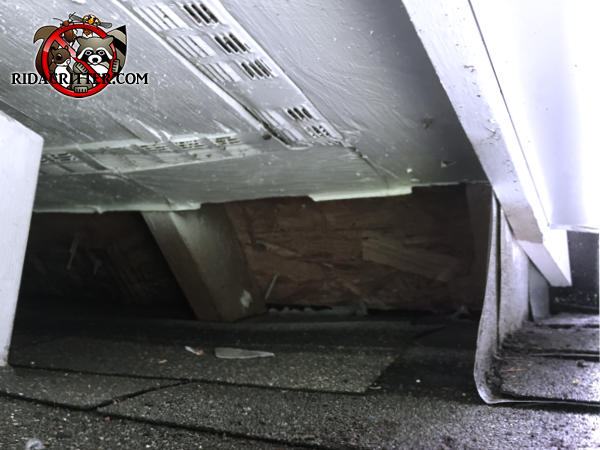 Missing soffit panel at a junction allowed raccoons into the attic of a house in Dunwoody Georgia