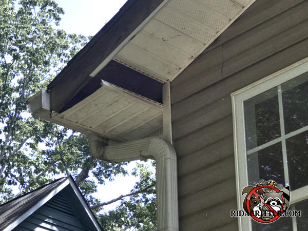 Raccoons got in because the soffit panel is missing a section and the adjacent section is hanging down from the soffit