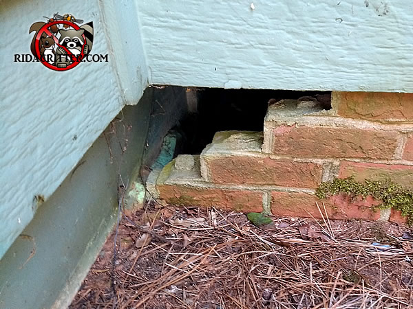 Raccoon Removal And Control Alpharetta Dunwoody