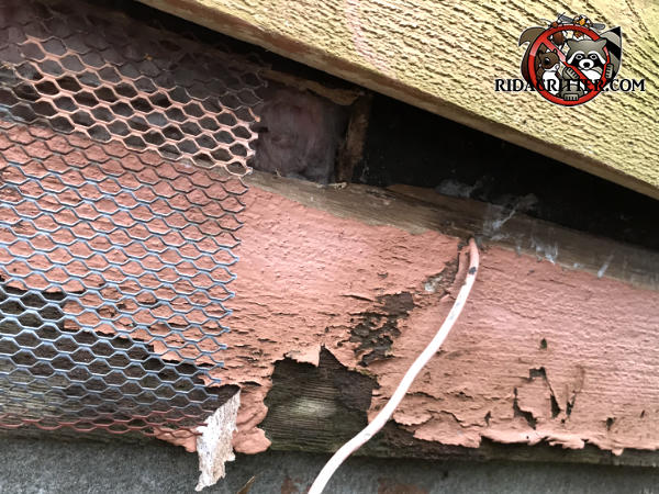 The homeowner applied mesh to only part of the deteriorated siding of the house and the rats got in through the unsealed part right next to the mesh