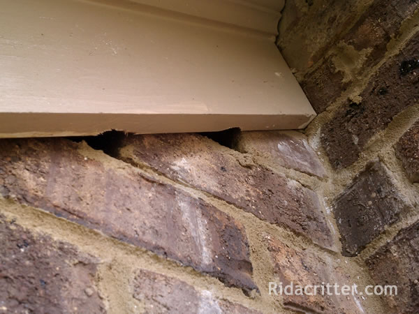Rat And Mouse Control Birmingham Bessemer Hoover