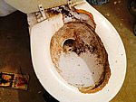 Rat damage to a toilet seat in a basement