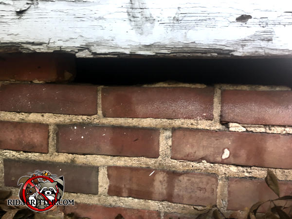 Three bricks are missing from the top course of the foundation wall under the sill plate and will have to be replaced to keep Norway rats out of a house in Atlanta