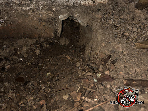 Norway rat burrow through the block foundation into the crawl space of a house in Smyrna Georgia.
