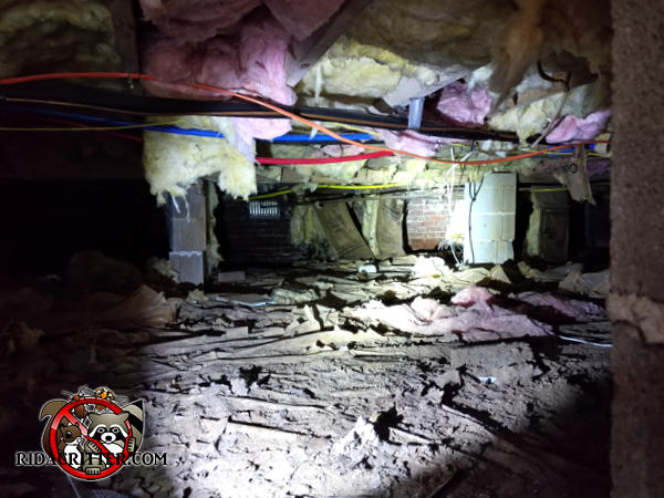 Norway rats tore up the insulation and vapor barrier in the crawl space of a house in Macon Georgia