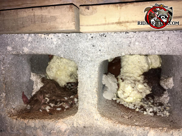 Rats got into a crawl space in Atlanta because a cinder block was sideways and the holes were horizontal rather than vertical