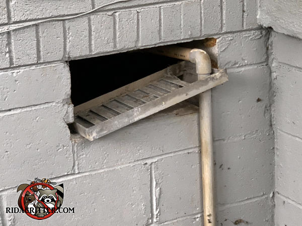 The foundation vent cover in a block foundation of a house in Atlanta is tipped forward and allowed rats to climb a pipe into the crawl space of the house.