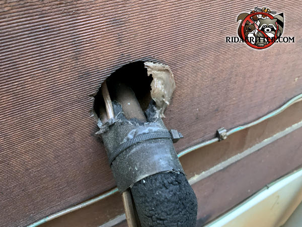 Rats chewed away the caulk around a pipe where it passed through the wall to get into a house in Blairsville Georgia