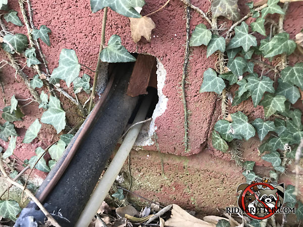 Gap around air conditioning pipes passing through a cinder block were further gnawed by rats so they could get into the crawl space of a house in Marietta Georgia.