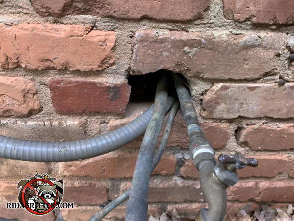 Pipes were passed though a missing brick in the exterior wall and there is a big gap that the rats got through