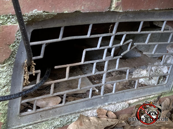 A rat chewed through the lattice of an aluminum foundation vent to get into the crawl space of a house in Atlanta