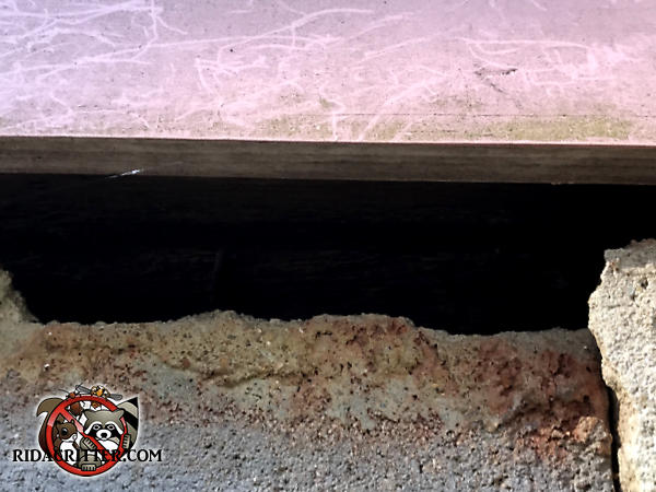 Mortar fell out of the gap between the foundation blocks and the sill plate creating a gap that allowed rats into a house in Albany Georgia