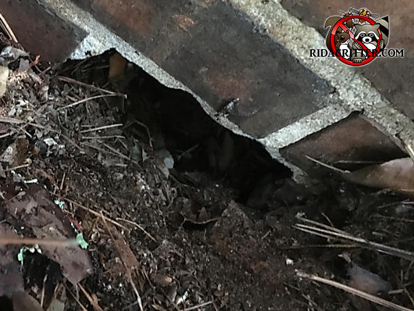 Missing brick at ground level on the outside of a house in Americus Georgia allowed Norway rats to get into the house