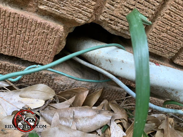 Large space around large Romex wire where it passes through a brick wall allowed rats into a house in Atlanta Georgia