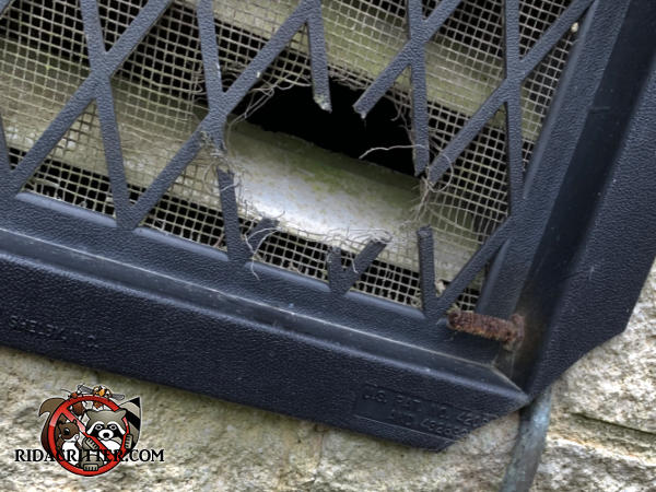 Rats gnawed a two inch hole through the lattice and screen of a plastic foundation vent cover to get into a house in Atlanta