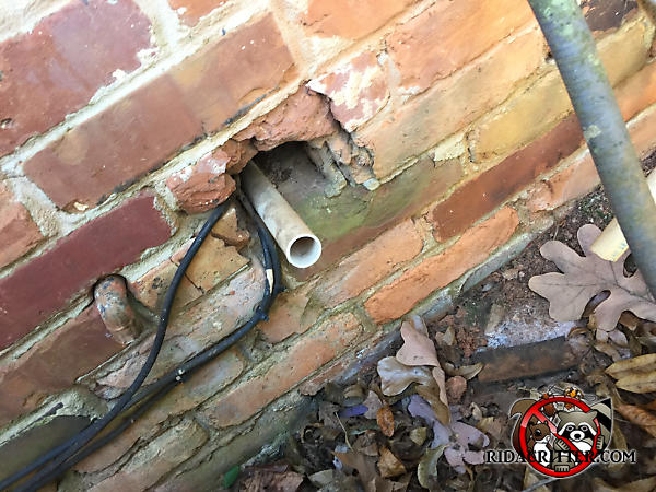 Four inch gap around a pipe where it passes through the brick wall of a house in Chattanooga allowed rats to get into the house