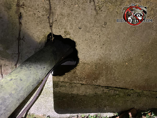 Large gap around a pipe where it passes through a block wall allowed rats into the basement of a Decatur Georgia home