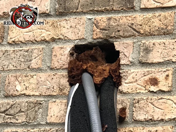 Rats gnawed through the insulating foam use to seal around the air conditioning pipes and wires where they passed through the brick wall