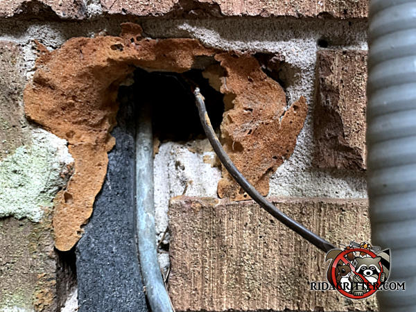 Hole where pipe passed through a brick wall of a house in Marietta was sealed with foam insulation but rats chewed through it