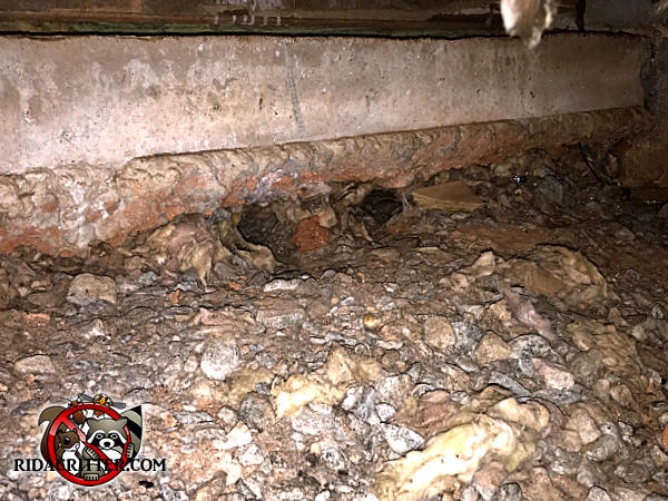 Norway rat burrow at the bottom of the foundation in the crawl space of a house in Marietta Georgia