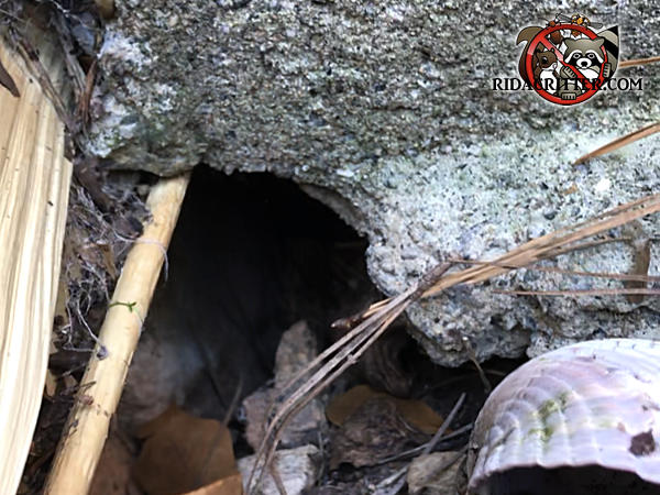Baseball sized hole in the block foundation allowed Norway rats to get into a house in Red Bank Tennessee