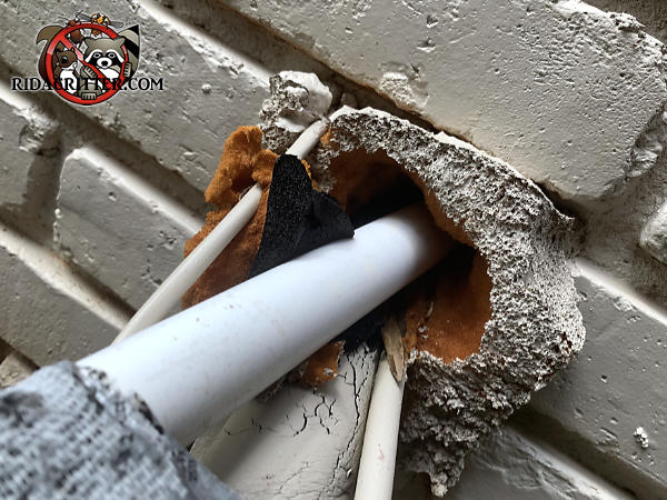 Rats gnawed through the insulating foam used to seal a hole where pipes and wires were passed through the wall of a house in Woodstock Georgia
