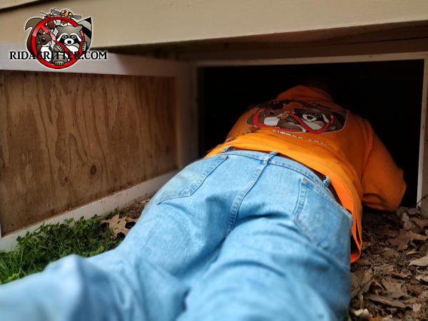 Man on his belly with his head in a crawl space access opening doing Norway rat control at a house in Macon Georgia