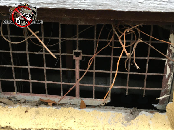 Rats chewed through the lattice in the lower right hand corner of a rusty foundation vent to get into a crawl space in Atlanta