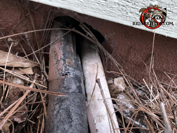 Hole in the foundation of a house in Athens Georgia where pipes pass through is at ground level and made it easy for rats to get into the house