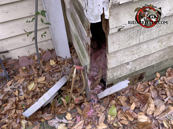 An exterior corner of a house in Cumming Georgia is falling apart due to poor maintenance and rats got in through the gap