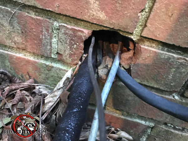 Rats got into a brick house in Collegedale Tennessee through a gap around the air conditioning pipes where they passed through the bricks