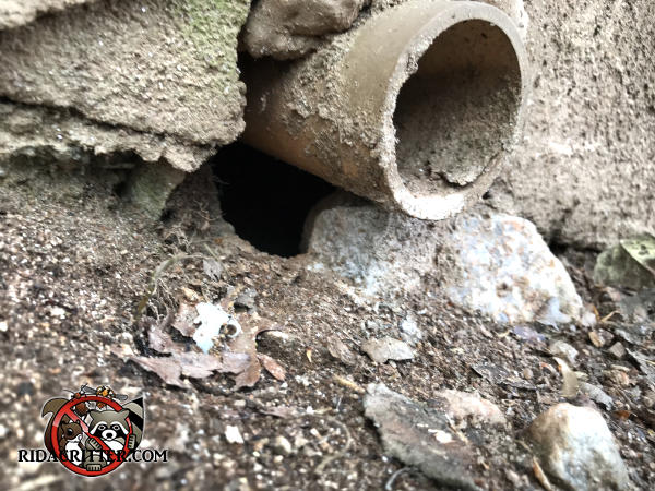 Rat burrow in the soil under a pipe sticking out of the foundation of a house in Decatur Georgia