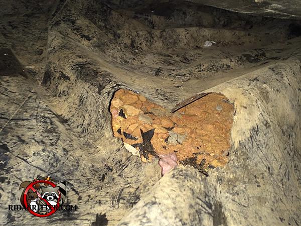 Rat Removal And Rat Proofing Metro Atlanta Marietta