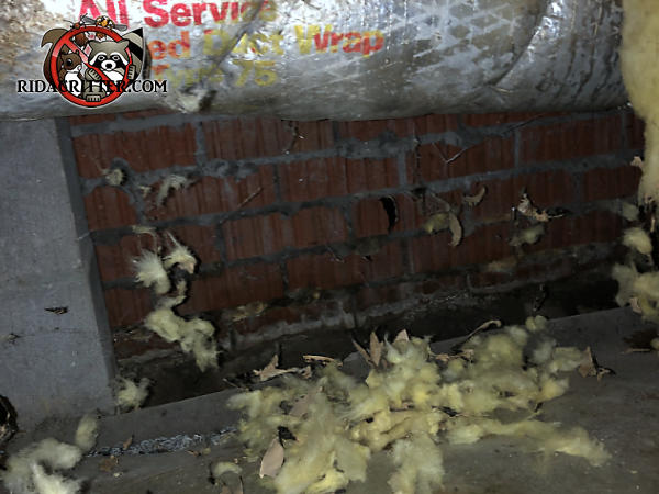 Pile of shredded insulation on the cement floor beneath a torn insulated heating duct hanging from the joists in the crawl space of a house in Americus Georgia