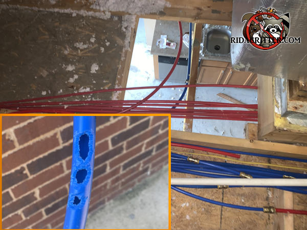 Water damage to a house in Birmingham Alabama caused by roof rats gnawing holes through the plastic plumbing pipes.