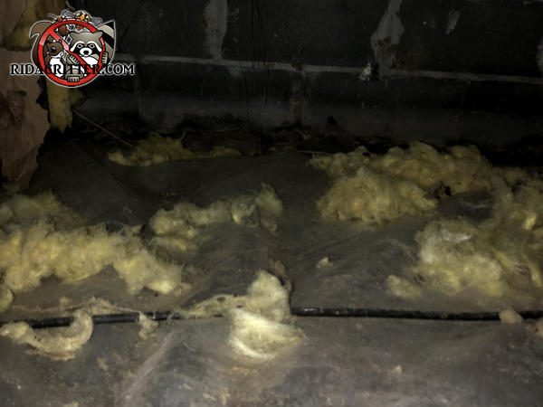 Chunks of insulation on the vapor barrier after being pulled from between the floor joists by Norway rats in the crawl space of a house in Atlanta.