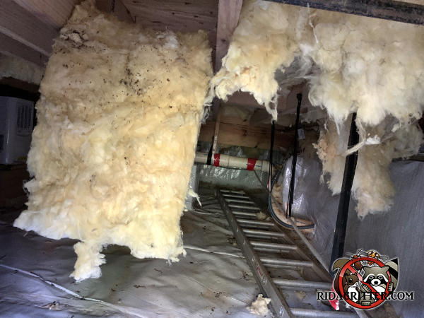 Insulation hanging down from between the joists in the crawl space of a house in Decatur Georgia because rats tore it down.