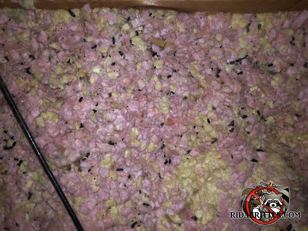 Rat droppings in the insulation in the attic of a house in Bryant Alabama